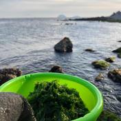 【新鮮】~国産天然~あおさのり(20g×4袋) 20g×4袋 魚介類(海藻) 通販