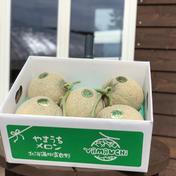 山内農園 メロン 秀品 8kg 4〜6玉 8kg キーワード: メロン 通販