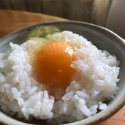しあわせ卵かけご飯 土佐ジロー卵20個 10個入り×2 卵 通販
