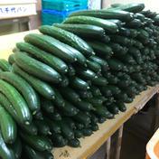 黒田農園 新【少人数】きゅうりと、オクラのセット 約1.7kg程度