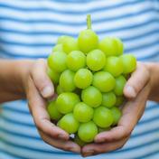 (家庭用)産地直送 朝採れ シャインマスカット  1kg超え 1kg 果物や野菜などのお取り寄せ宅配食材通販産地直送アウル