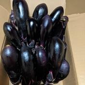 祐志様専用 キュウリと茄子箱いっぱい! 1.5~2.0㌔ 野菜(茄子) 通販