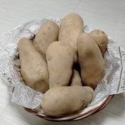 やっちゃん農園のジャガイモ メークイン20kg 20kg 島根県 通販