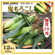 新潟県津南産 鬼もろこし 12本 スイートコーン とうもろこし 12本(約5kg) 果物や野菜などのお取り寄せ宅配食材通販産地直送アウル