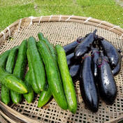 さくま農園「茄子とキュウリの2.5㎏セット」 2.5㎏ 果物や野菜などのお取り寄せ宅配食材通販産地直送アウル