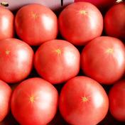 山七農園の王様トマト2L 3kg 果物や野菜などのお取り寄せ宅配食材通販産地直送アウル