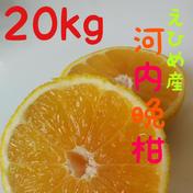 石川ファームの愛南ゴールド【訳あり】河内晩柑 20kg 果物(柑橘類) 通販
