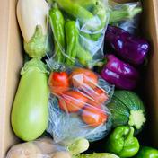 新鮮朝取り夏野菜セット  2kg前後 果物や野菜などのお取り寄せ宅配食材通販産地直送アウル