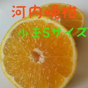 河内晩柑 小玉Sサイズ10kg【訳あり】 10kg 果物(柑橘類) 通販