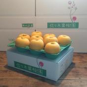 【お試し小玉】シナノゴールド3kg 約3kg(10~12玉) 果物 通販