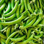 (訳あって値下げしました!)甘さはじける!スナップエンドウ 2キロ 2キロ 野菜(豆類) 通販