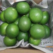 果汁たっぷり、まとめてお得なマイヤーレモン5㎏ 5㎏    80サイズになります 沖縄県 通販