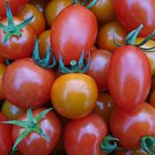 ブタとコジカの農楽園 定番トマトセット 1kg 野菜(トマト) 通販