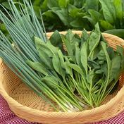 【竹粉育ち】サラダほうれん草450g+小ねぎ500gお試しセット(減農薬特別栽培) 950g キーワード: お試し 通販