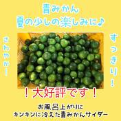初夏の爽やか青みかん 5キロ 果物や野菜などのお取り寄せ宅配食材通販産地直送アウル