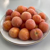 冷凍トマトベリー 2kg 秋田県 通販