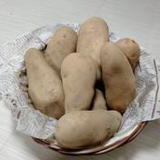 やっちゃん農園のジャガイモ メークイン10kg 10kg 島根県 通販