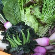 I様専用 6つの野菜チョイス+スナックエンドウ1kg 大樹地農園