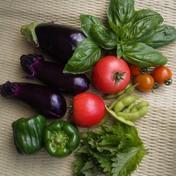トウモロコシ[味来]とおまかせ野菜の詰合せ トウモロコシ6本と夏野菜4~6種類 全重量5kg以内 群馬県 通販
