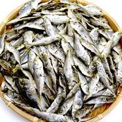 鯵子の煮干 100g 魚介類 通販