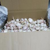 【4.8kg詰め】和想の乾燥ニンニクこと ワソリック!【規格外品バラ】 80サイズ箱 4.8kg   種子バラ詰め キーワード: 規格外 通販