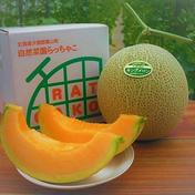 【農薬・化学肥料不使用】至高の朝採りキングメロン 秀品1玉(1.4㎏~) 果物(メロン) 通販