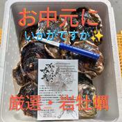 厳選・岩牡蠣 【お中元】にいかがですか☆ 岩牡蠣 3キロ箱(カキナイフ・レシピ付き) 果物や野菜などのお取り寄せ宅配食材通販産地直送アウル