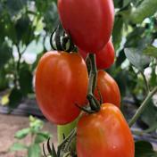 カラフルアイコボックス 3kg 果物や野菜などのお取り寄せ宅配食材通販産地直送アウル