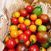 完熟!のぐちファーム安曇野産カラフルミニトマト2kg 2kg のぐちファーム