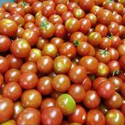 訳あり!!体に優しいミニトマト 約2kg 約2kg 果物や野菜などのお取り寄せ宅配食材通販産地直送アウル