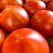 加賀のトマト 2kg 2kg箱入 M玉て12個程度が目安となります 果物や野菜などのお取り寄せ宅配食材通販産地直送アウル