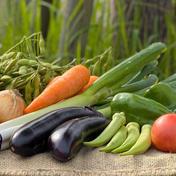 戸張農園おまかせ野菜セット 6種類 80サイズ  3キロくらい 千葉県 通販