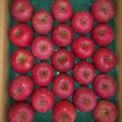 サンふじ23玉5㎏ 5㎏ 果物(りんご) 通販