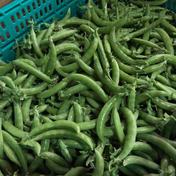 【採りたてお届け!】べっぴんやさいの甘ーいスナップえんどう(約500g) 約500g 野菜(豆類) 通販