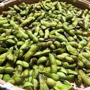 令和2年京都丹波黒枝豆  莢取り5kg 5kg 野菜(豆類) 通販