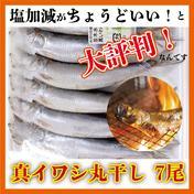 【冷凍便】並木水産の「まいわし丸干し」7尾入×5パック 1,100g 道の駅みのりの郷東金