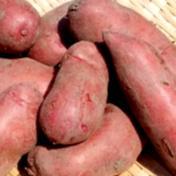 【新じゃがいも】タワラヨーデル(4kg) 4kg 果物や野菜などのお取り寄せ宅配食材通販産地直送アウル