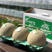 山内農園 秀品 3玉 1.35kg×3 4kg キーワード: メロン 通販