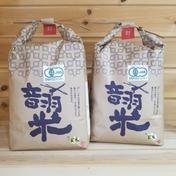 令和2年度 有機JAS玄米 音羽米 10キロ 5キロ×2個 10kg 5kg×2 愛知県 通販