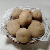 やっちゃん農園のジャガイモ キタアカリ5kg 5キロ 島根県 通販