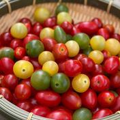 【山地様専用】訳ありトマト+なす詰め合わせセット 3.5kg 果物や野菜などのお取り寄せ宅配食材通販産地直送アウル