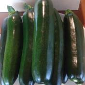 夏にドンピシャ カリウムで躰を冷やすズッキーニ 10本 2kg 20年以農薬を使用していません 約2kg 果物や野菜などのお取り寄せ宅配食材通販産地直送アウル