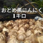 ★送料無料★☆生にんにくオマケ付き☆おとめ黒にんにく1キロ (熊本産  農薬・化学肥料不使用) 1キロ 熊本県 通販