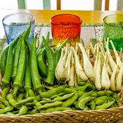 【うちなーむん】おつまみ野菜セット(500g) 500g 沖縄県 通販