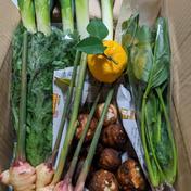 お試し 志村さん家の『ネギ1kg+野菜4品セット』 ネギ1kg+α(野菜4品) 埼玉県 通販