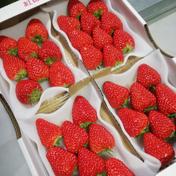 紅ほっぺ 完熟大粒イチゴ 290グラム×4パック 果物(いちご) 通販