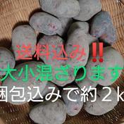 週末農家のグランドペチカ 大小混ぜ 約2㎏ (梱包込みで2㎏以内となります) 愛知県 通販