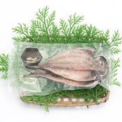 長崎県産アジのひらき(塩漬け)5袋 1袋(2枚または3枚) 長崎県 通販