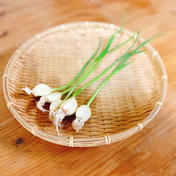 湧水発芽にんにく 5個入×10パック 果物や野菜などのお取り寄せ宅配食材通販産地直送アウル