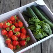 完熟やよいひめときゅうりバジルの詰合せ 🍓やよいひめ400g  きゅうり5本  バジル約3枝 果物 通販